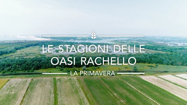 The seasonsof Rachello Oases: Spring